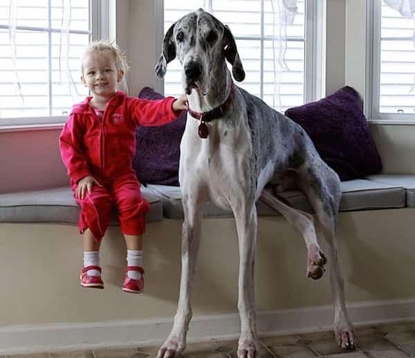 فتاة صغيرة تجلس بجانب كلبها الكبير